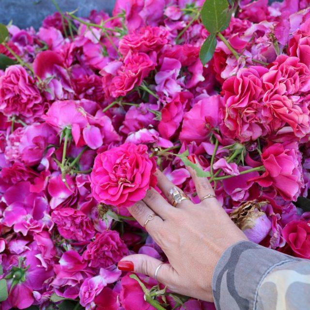 Viva a primavera! Com as flores as coisas boas dahellip