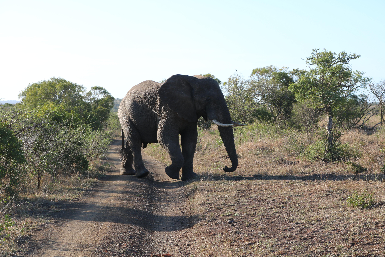 Elefantes cruzando a pista