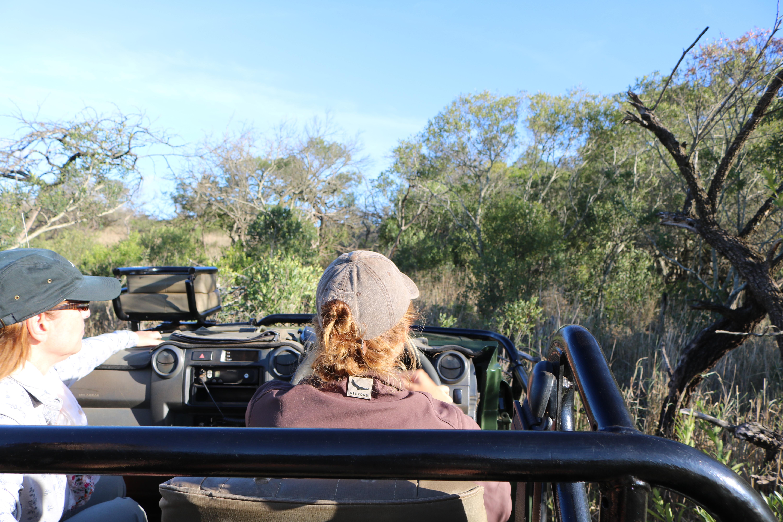 Safari em Phinda