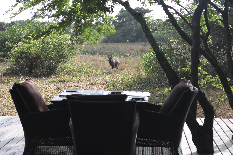 Os animais passam a todo o momento na frente do Lodge