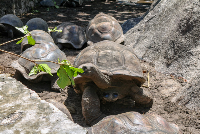 Tartarugas centenárias