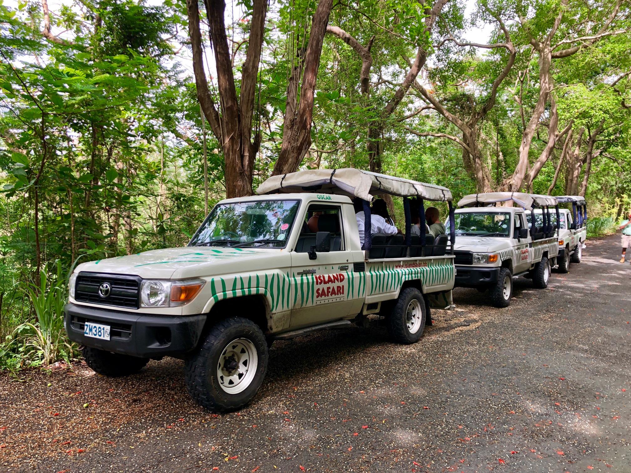 Jipes do Safari